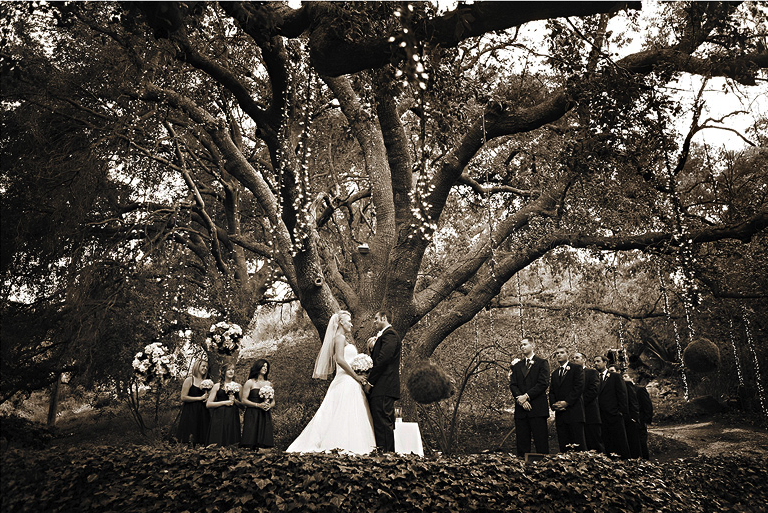 Wedding Blog Inspired: Tree faring Vows