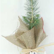Found: Tree Favors
