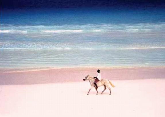Wedding Blog Couples Profiled: Beaches