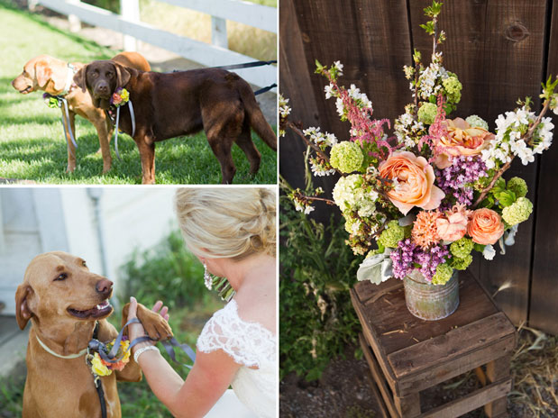dog bridal attendant puppy pet ringbearer