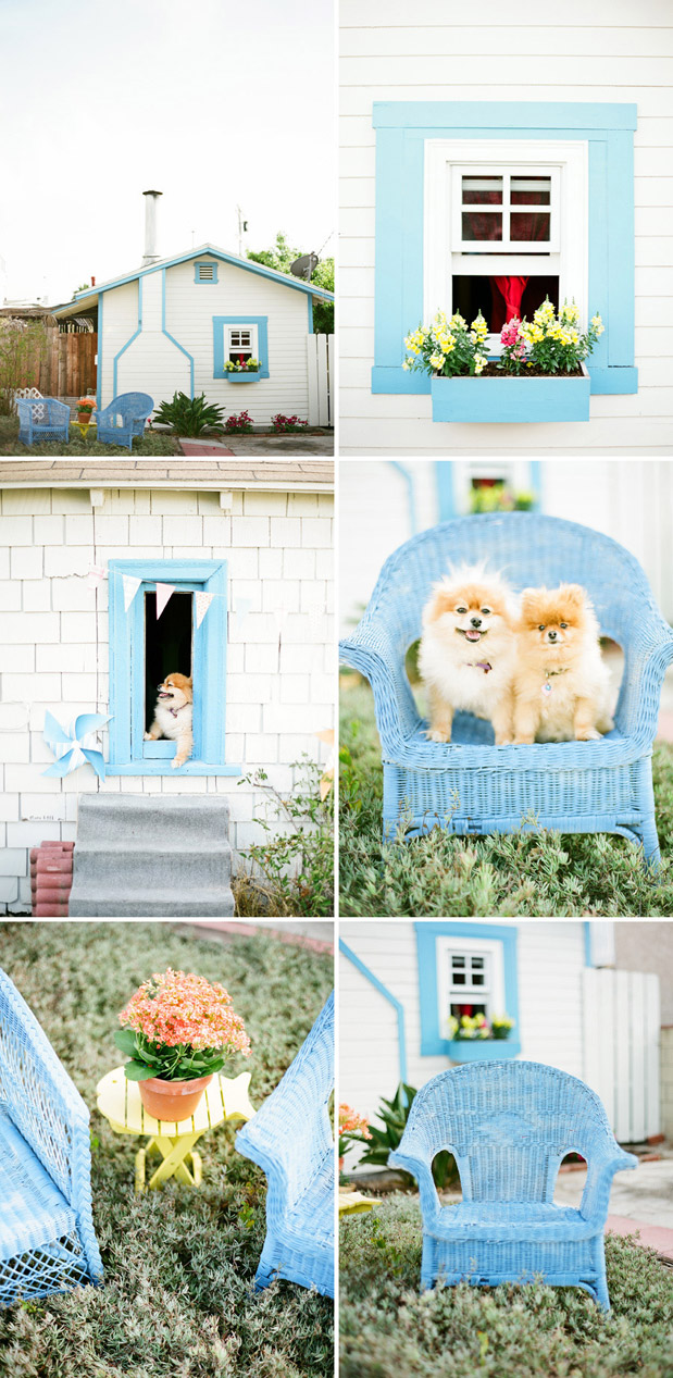 pet engagement session