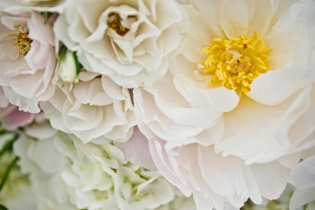 Wedding Blog Botanical Gardens Wedding Welcomes Spring