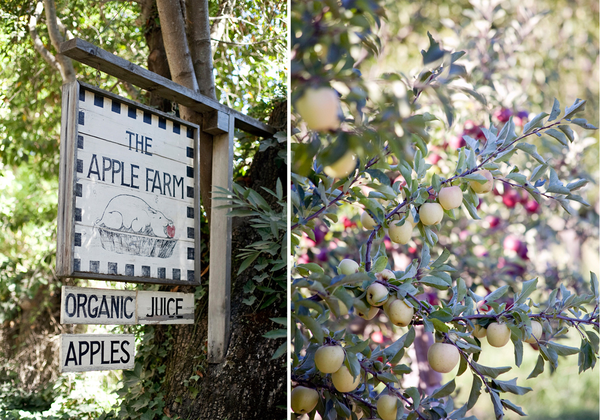 Wedding Blog Apple Orchards and a Pleated Wedding Gown