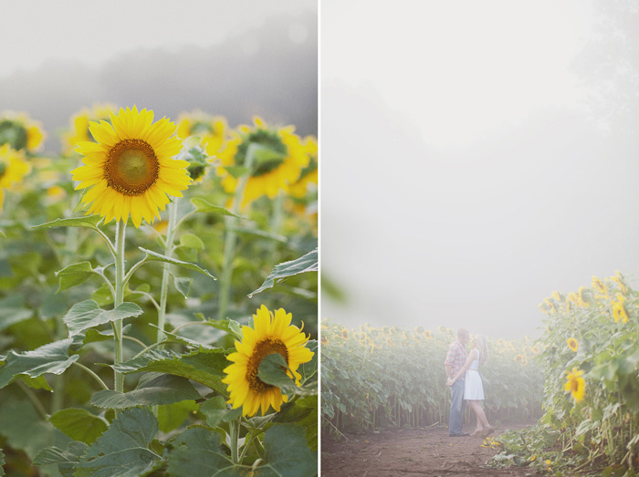 spring_sunflower_field_engagement_2
