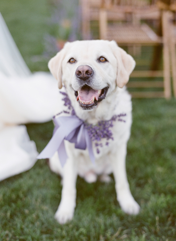 Wedding Blog Woodinville Lavender Farm Wedding Ideas