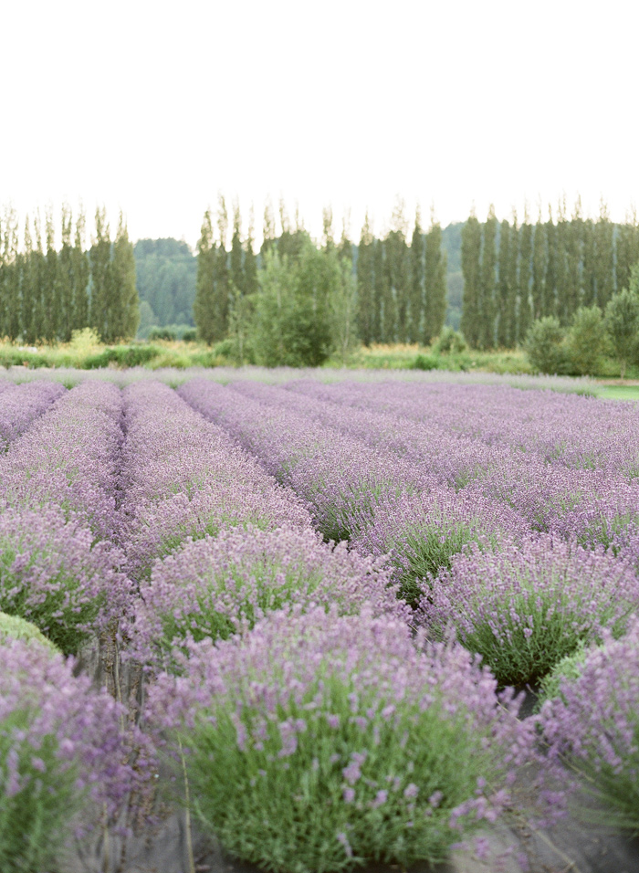 woodinville-lavender-farm-seattle-purple-wedding-5