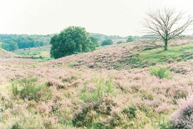 dreamy-natural-heathlands-floral-inspiration-shoot-33