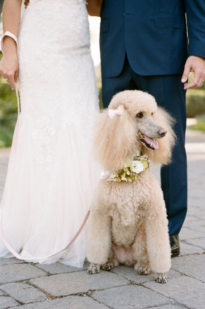 san-ysidro-ranch-wedding-pink-lace-poodle-inspiration30