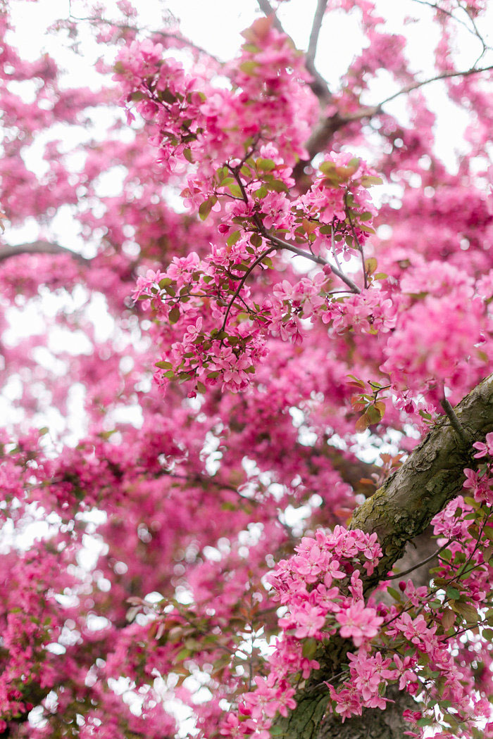 spring-pink-blossoms-ethereal-inspiration-shoot01